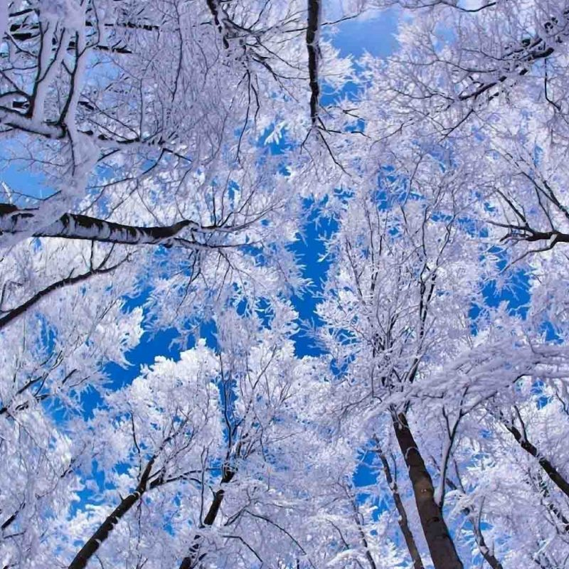 10 New Free Winter Wallpaper Download FULL HD 1080p For PC Desktop 2020 free download winter images free download impremedia 800x800