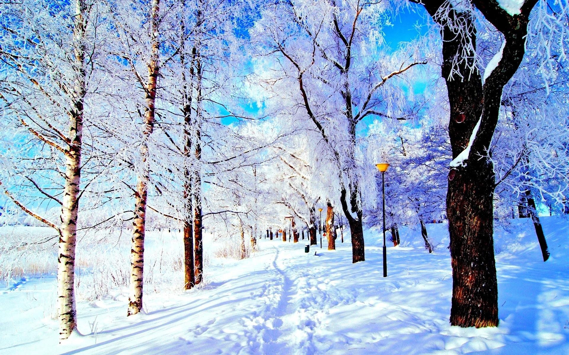 winter: lantern sky trees nice pretty cold lovely snow winter