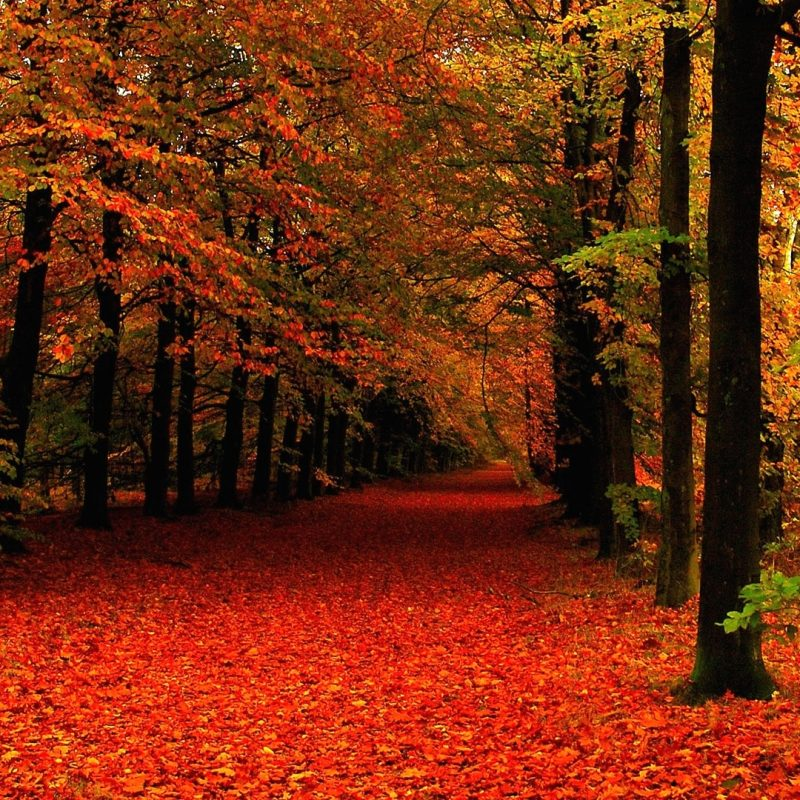 10 Top Fall Leaves Wallpaper Desktop FULL HD 1920×1080 For PC Background 2020 free download winter leaves hd free wallpapers for desktop hd wallpaper 2 800x800