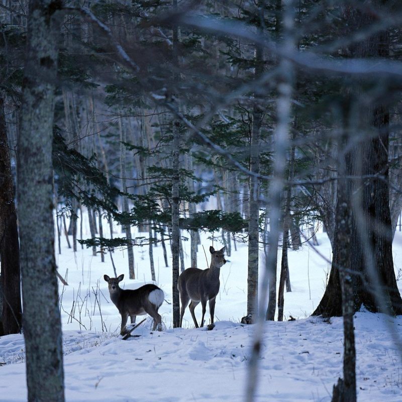10 Latest Free Winter Scene Screensavers FULL HD 1920×1080 For PC Background 2020 free download winter scene desktop backgrounds free group 82 800x800