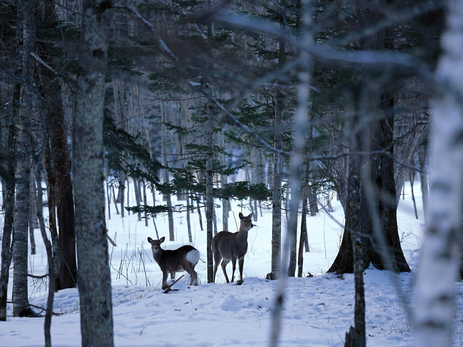 winter scene desktop backgrounds free group (82+)