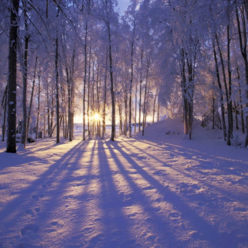 10 New Winter Scenes For Desktops FULL HD 1920×1080 For PC Desktop 2020 free download winter scene desktop wallpapers wallpaper cave 800x800