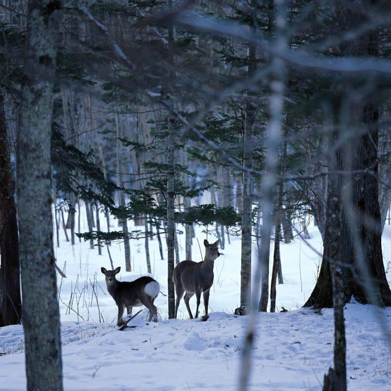 10 Latest Winter Scene Screensaver Free FULL HD 1080p For PC Desktop 2020 free download winter scene wallpaper free 34 winter scene images and wallpapers 800x800