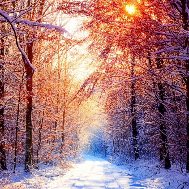 10 Top Winter Scenes Wallpaper 1920X1080 FULL HD 1080p For PC Desktop 2018 free download winter scenes e29da4 4k hd desktop wallpaper for 4k ultra hd tv e280a2 wide 800x800