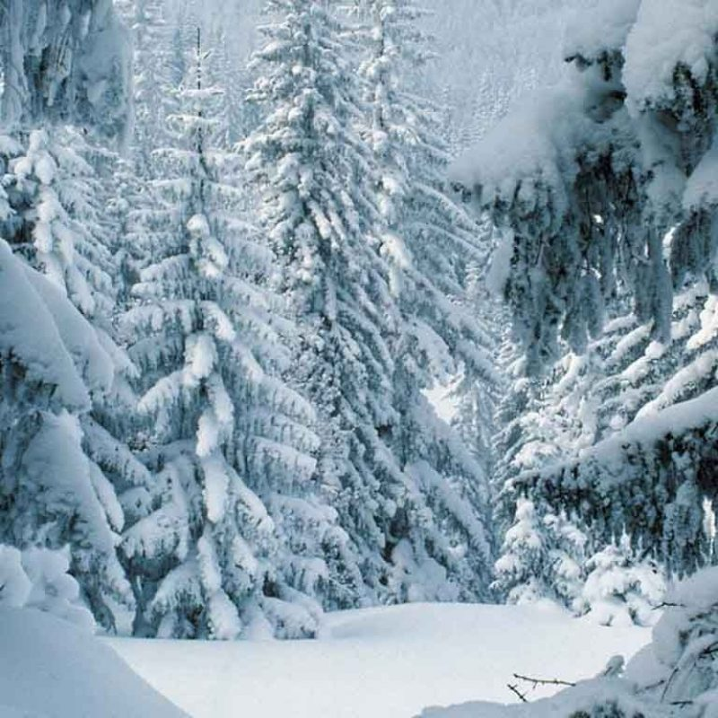 10 Latest Free Winter Scene Screensavers FULL HD 1920×1080 For PC Background 2020 free download winter scenes free winter desktop wallpaper winter scene uploaded 800x800