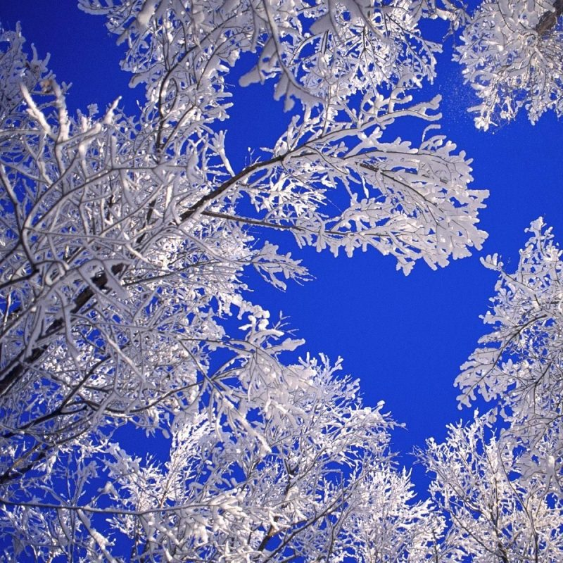 10 Latest Free Winter Scene Screensavers FULL HD 1920×1080 For PC Background 2020 free download winter scenes frosted trees winter scene free wallpaper in free 1 800x800