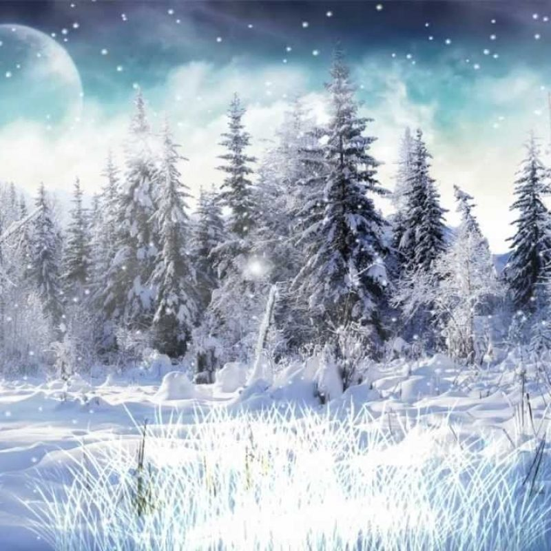 10 Most Popular Winter Snow Scenes Wallpaper FULL HD 1920×1080 For PC Background 2018 free download winter snow animated wallpaper http www desktopanimated youtube 800x800