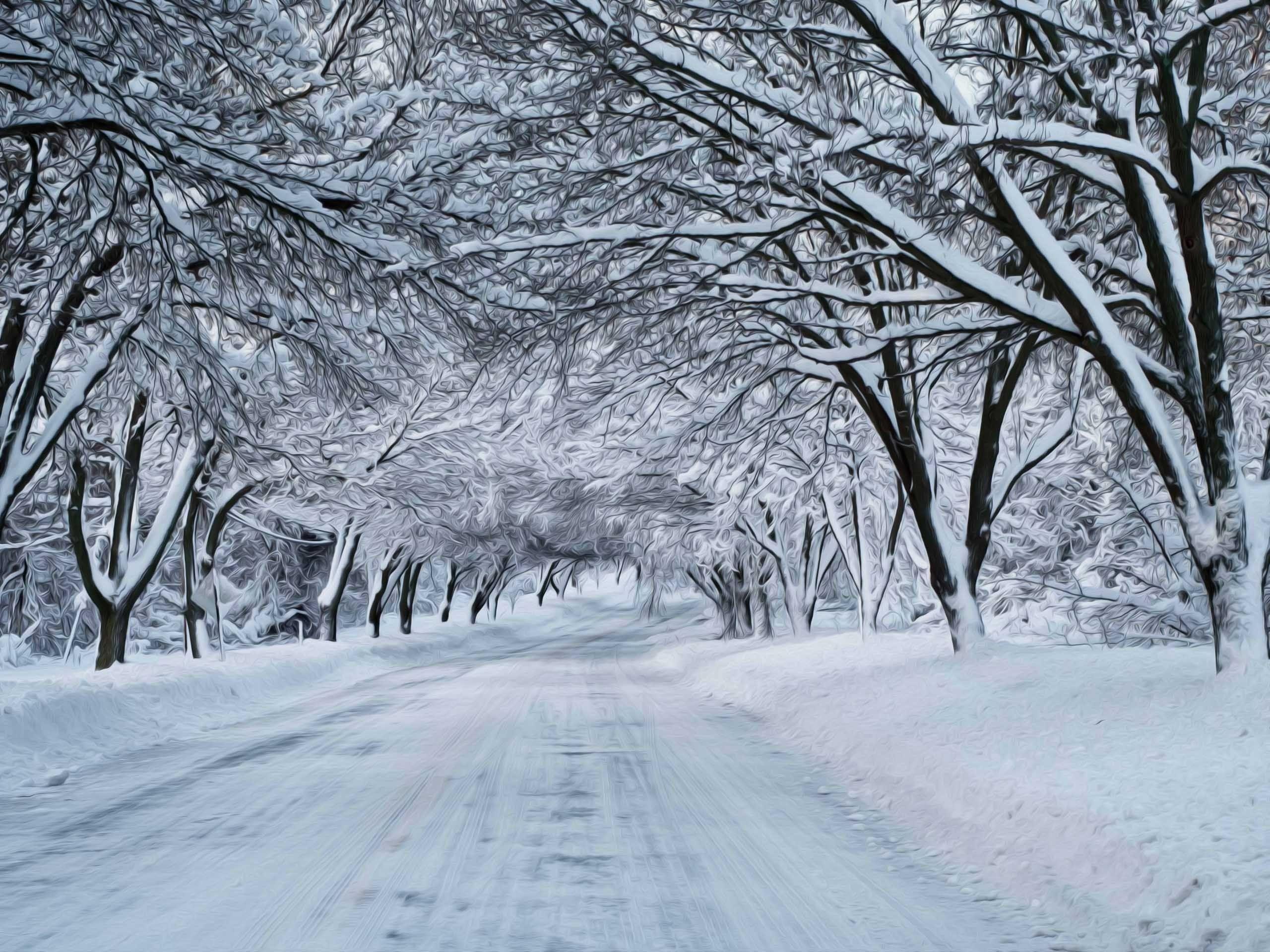 winter snow scenes | winter nature snow scene | winter scenes