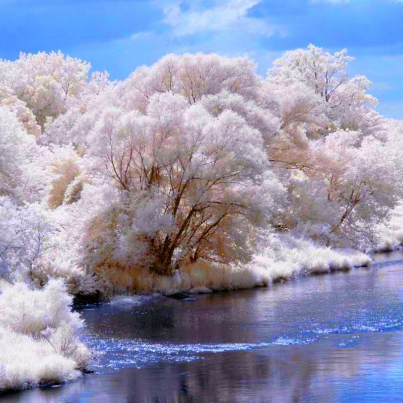 10 New Free Animated Winter Desktop Wallpaper FULL HD 1920×1080 For PC Background 2020 free download winter snow trees bank river desktop animated wallpaper free 800x800