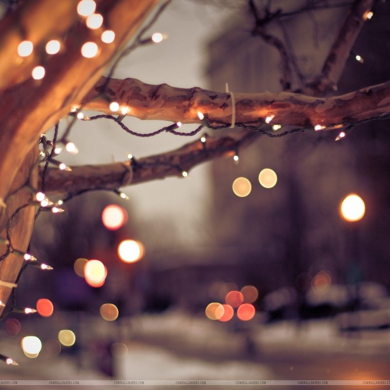 10 Best Winter Christmas Lights Wallpaper FULL HD 1080p For PC Background 2018 free download winter tree lights christmas wallpaper christmas hd wallpapers 800x800