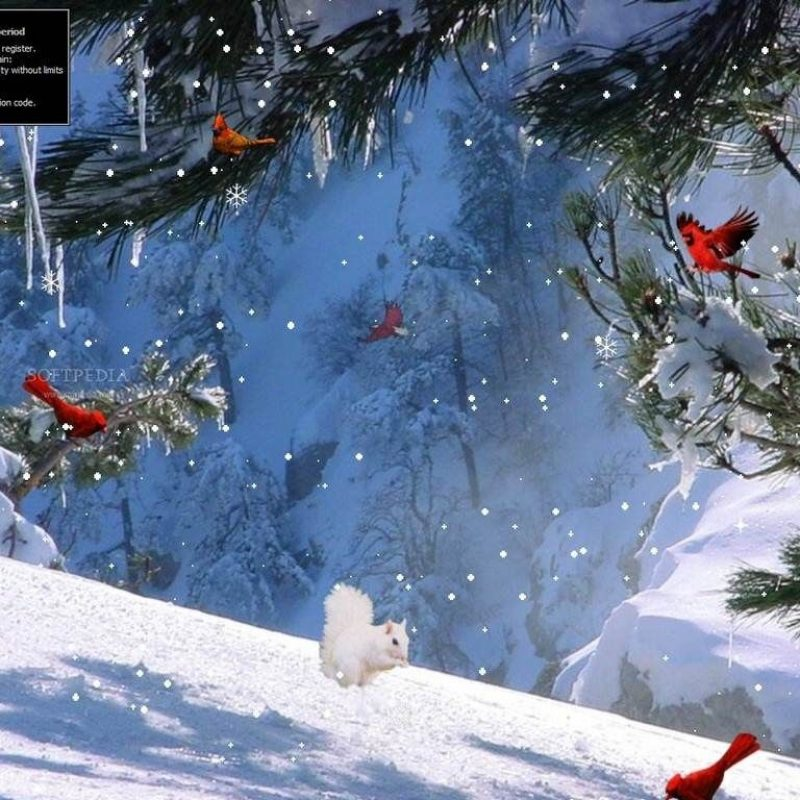 10 Best Winter Screensavers And Wallpaper FULL HD 1080p For PC Desktop 2018 free download winter wallpapers full hd group 1920x1080 winter screen wallpapers 800x800