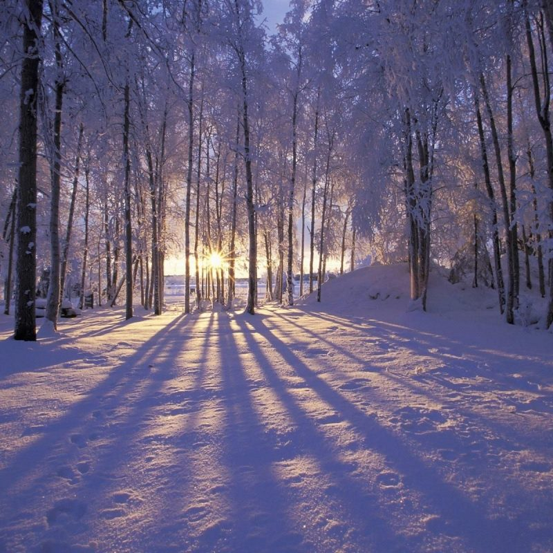 10 Latest Winter Scene Screensaver Free FULL HD 1080p For PC Desktop 2018 free download winter wallpapers hd desktop backgrounds images and pictures 1 800x800