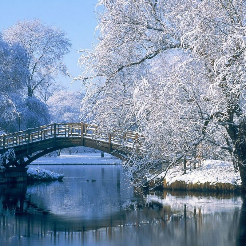10 Best Free Winter Wonderland Wallpaper FULL HD 1920×1080 For PC Desktop 2018 free download winter wonderland desktop backgrounds wallpaper cave wallpaper 4 800x800