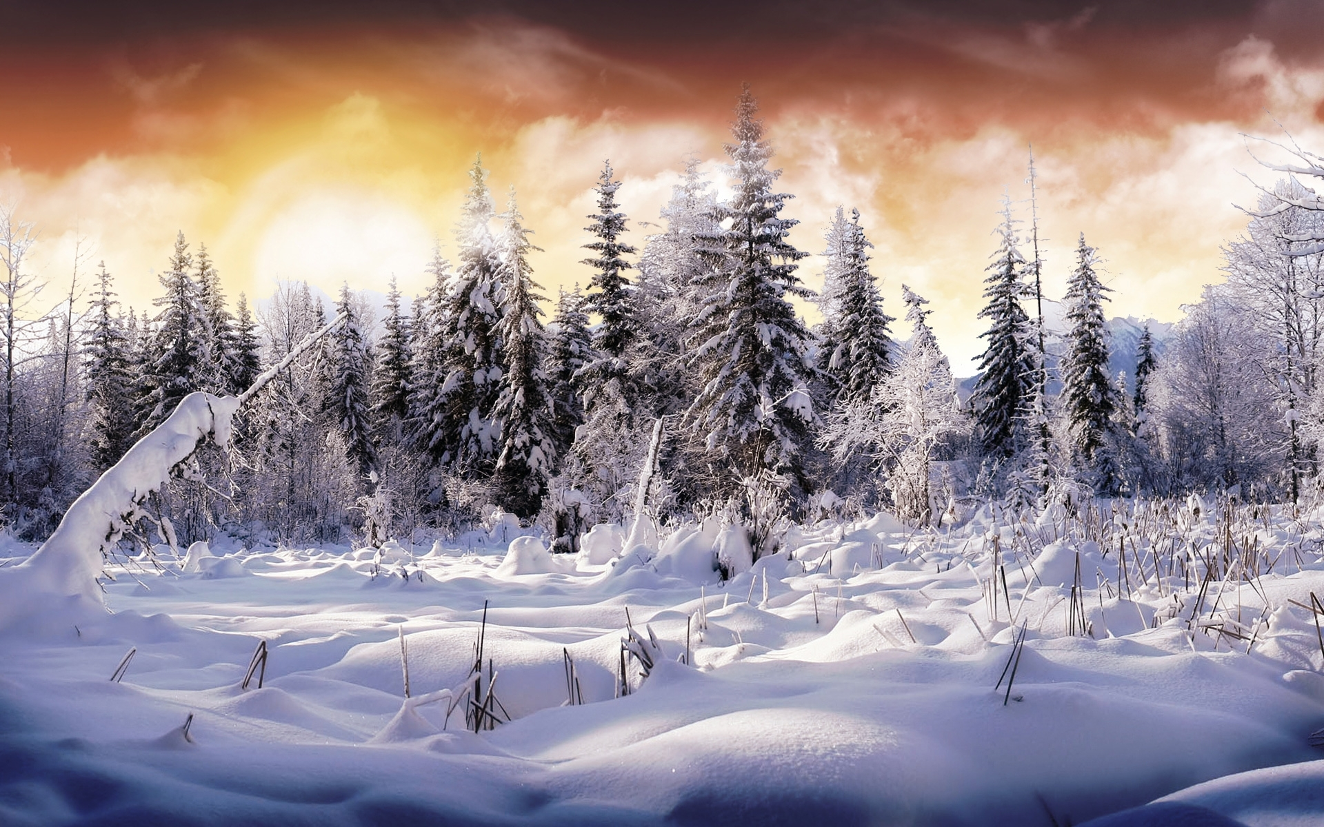 winter-wonderland-hd-wallpaper-free-for-desktop - hd wallpaper