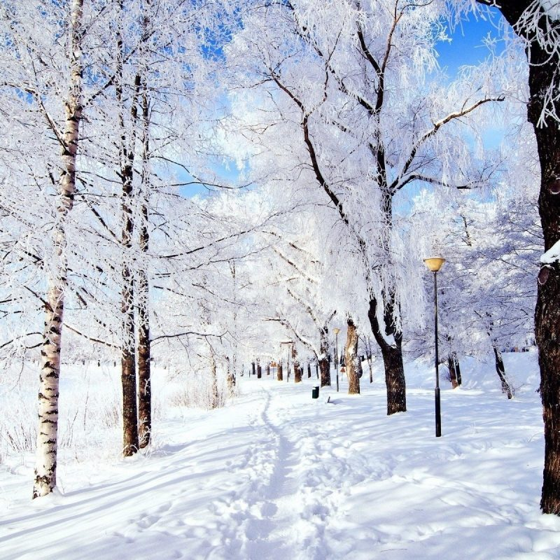 10 Best Free Winter Wonderland Wallpaper FULL HD 1920×1080 For PC Desktop 2018 free download winter wonderland iphone wallpapers for free 800x800