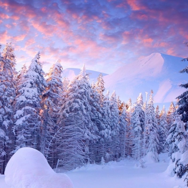 10 Most Popular Winter Wonderland Background Pictures FULL HD 1920×1080 For PC Background 2018 free download winter wonderland wallpaper and background image 1366x768 id448940 800x800