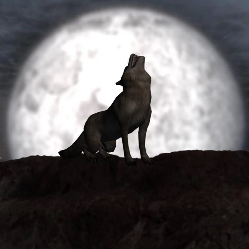 10 Best Werewolf Howling At The Moon Pictures FULL HD 1920×1080 For PC Desktop 2018 free download wolf howling at full moon individual elements on green screen 800x800