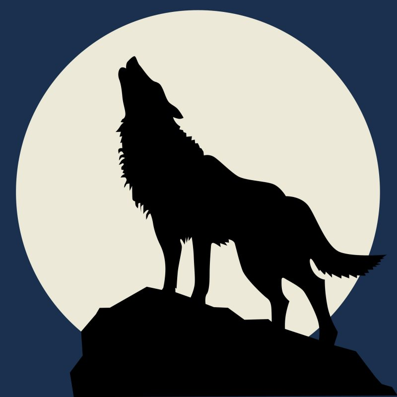 10 Most Popular Drawing Of A Wolf Howling At The Moon FULL HD 1080p For PC Background 2021 free download wolf howling at moon drawing at getdrawings free for personal 800x800