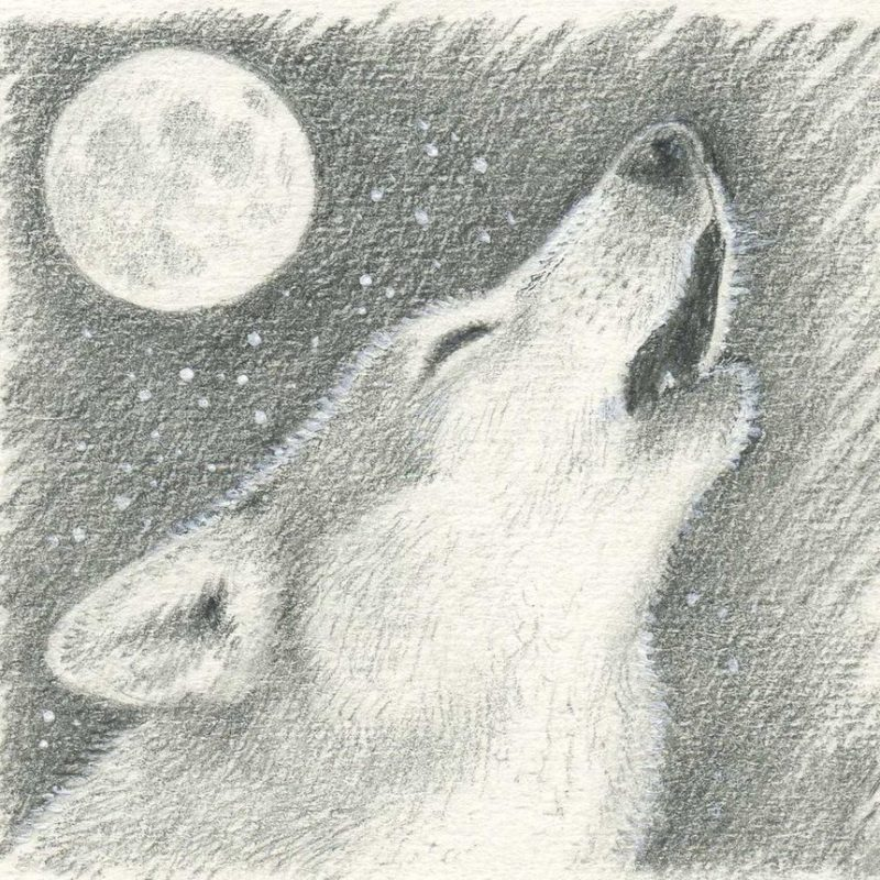 10 Most Popular Drawing Of A Wolf Howling At The Moon FULL HD 1080p For PC Background 2021 free download wolf howling at moonpheonix2and2 on deviantart 1 800x800
