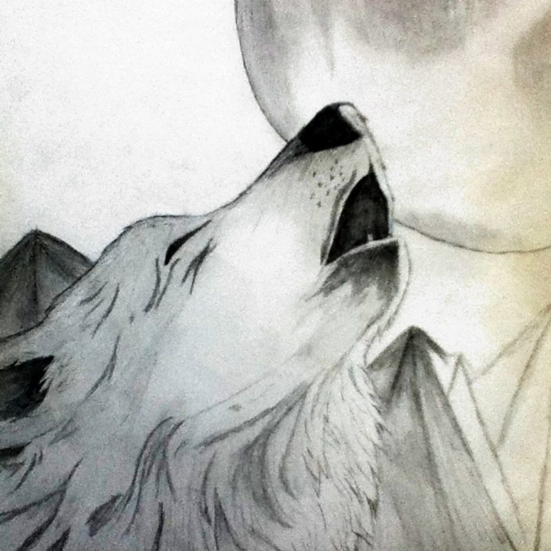10 Most Popular Drawing Of A Wolf Howling At The Moon FULL HD 1080p For PC Background 2021 free download wolf howling at the moon drawing at getdrawings free for 800x800