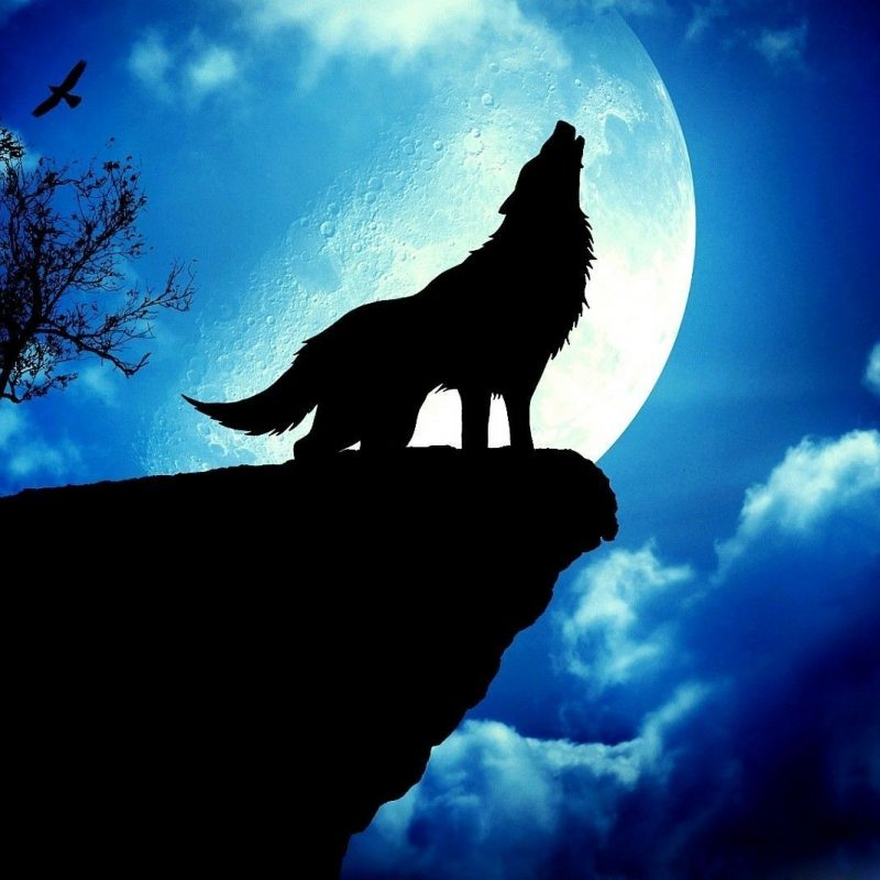 10 New Wolf Howling At The Moon Wallpaper Hd FULL HD 1080p For PC Background 2018 free download wolf howling at the moon wallpapers gallery 41 plus pic wpw5011323 800x800