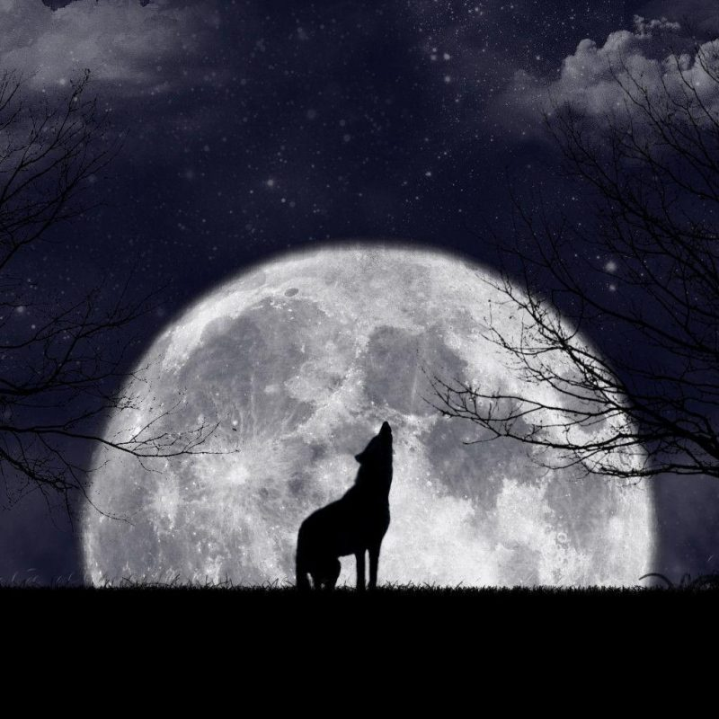 10 Most Popular Pics Of Wolves Howling At The Moon FULL HD 1920×1080 For PC Desktop 2018 free download wolf howling at the moon wallpapers wallpaper cave 1 800x800