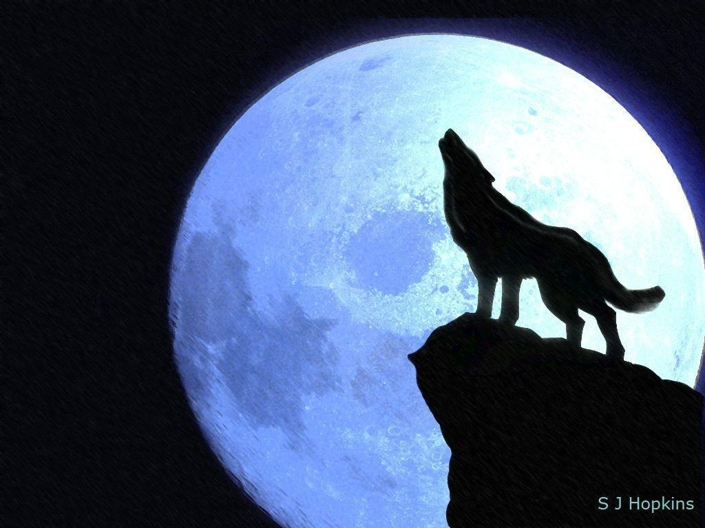 10 Latest Pics Of Wolf Howling At The Moon FULL HD 1920×1080 For PC Desktop