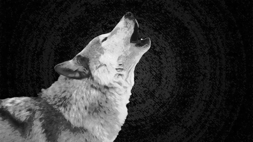 10 Most Popular Black And White Wolf Wallpaper FULL HD 1080p For PC Desktop 2020 free download wolf wallpaper whitexhuskie on deviantart 1024x576