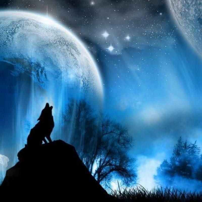 10 New Cool Wolf Desktop Backgrounds FULL HD 1080p For PC Background 2018 free download wolves backgrounds group 64 800x800