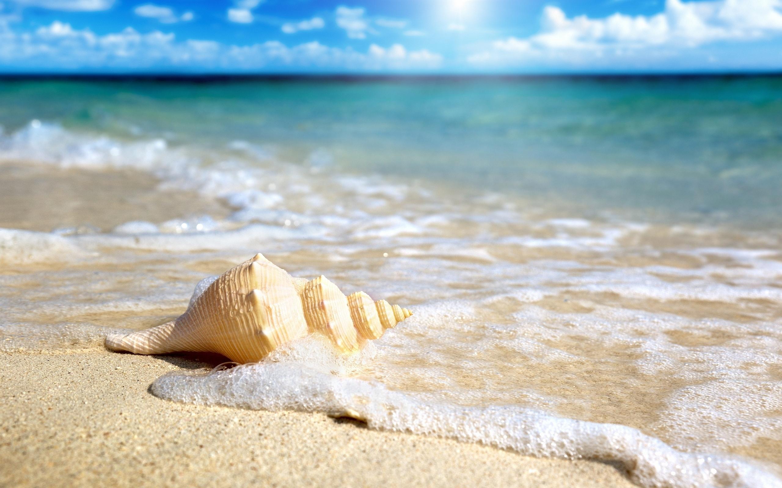 wonderful beach shell wallpaper 41192 2560x1600 px ~ hdwallsource