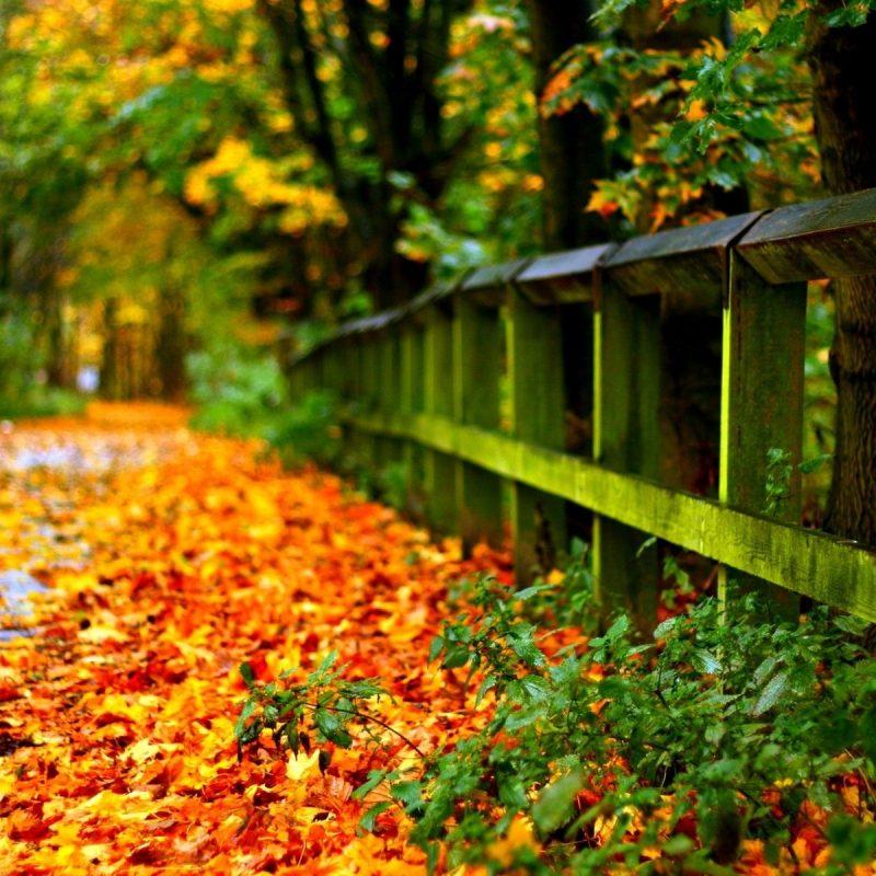 10 Most Popular Fall Leaves Desktop Wallpaper FULL HD 1920×1080 For PC Desktop 2020 free download yellowed autumn leaves hd desktop wallpaper high definition 800x800